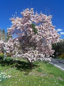 magnolia and cinco de mayo 004